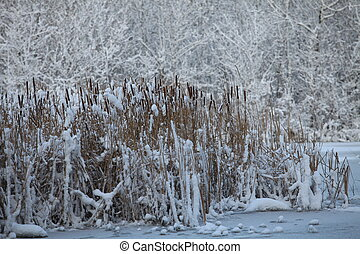 reeds in the snow winter landscape