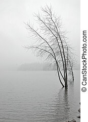 snowy lakeshore - snowy lake in winter