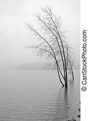 snowy lakeshore - snowy lake in winter