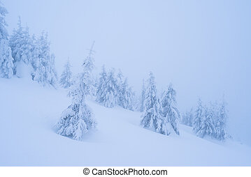 Snowy landscape in a mountain forest