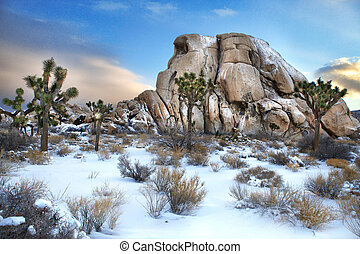 Joshua Tree National Park After Snow Storm