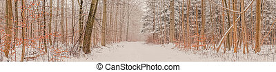 Snowy landscape in the forest at wintertime