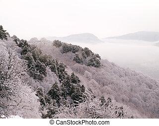 Snowy landscape.