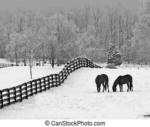 snowy meadow & horses - Horses in snowy rolling meadow with ...
