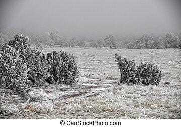 Snowy Meadow in Fog