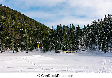 snowy meadow in spruce forest. beautiful winter scenery