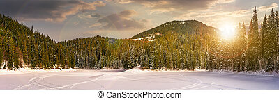 snowy meadow in winter spruce forest at sunset - snowy...