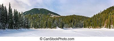 snowy meadow in winter spruce forest - snowy meadow in...