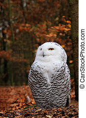 Snowy owl sitting on the ground in a forest