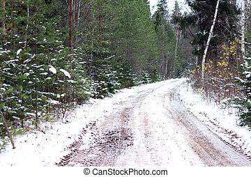 Snowy path in forest