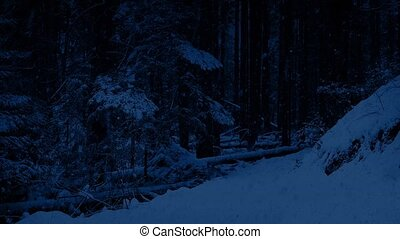 Snowy Path In The Woods At Night