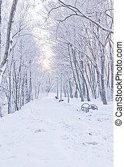 snowy path in winter
