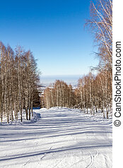 snowy path through the birch grove in the mountains of...
