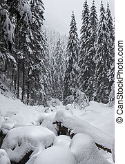 Snowy Pines and River in the Mountain