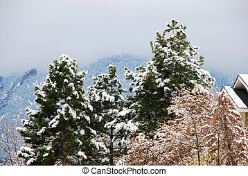 Snowy pines in front of the mist of a coming snowstorm