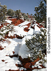 Hardy snow-covered Pinon pines (Pinus edulis) growing among the red rocks of Red Canyon in southern Colorado.