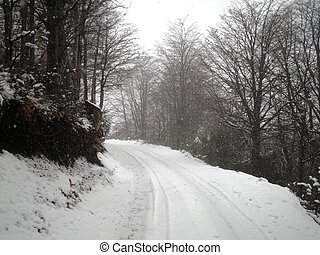 Snowy Road in Forest - A beautiful snowy road in the...