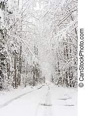 Snowy road in forest. Trees covered with snow.