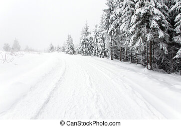 Snowy road in the forest