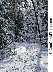Snowy road in the winter forest at sunset.