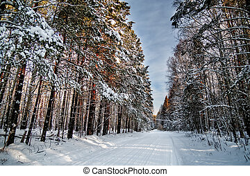Snowy road in the winter