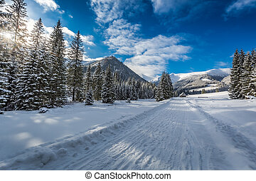 Snowy road leading to Chocholowska valley at winter, Tatra Mountains, Poland