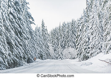 Snowy road near wood in United States