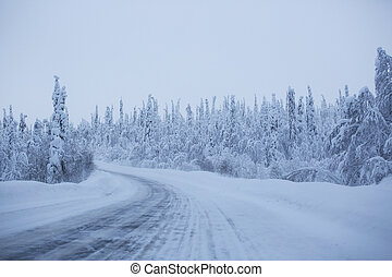 Snowy road surrounded by pine trees