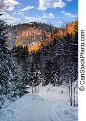 snowy road through spruce forest - winter mountain...