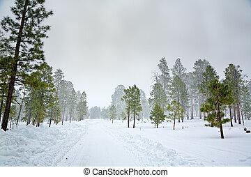 Snow storm in the forest near Flagstaff, Arizona