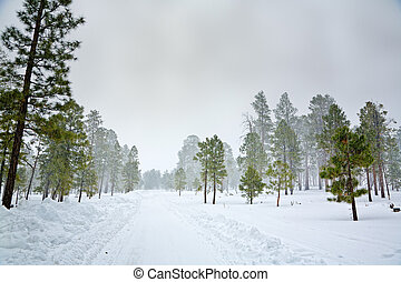 Snowy scene - Snow storm in the forest near Flagstaff,...