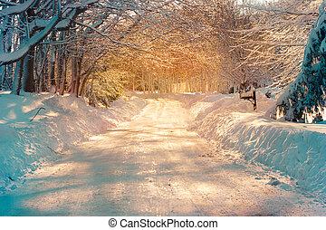 Snowy Street - Snowy street in golden sunlight after storm