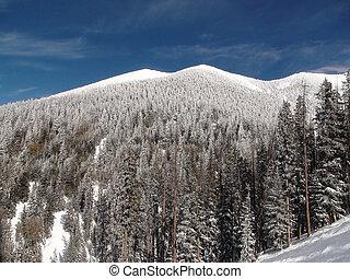 Snowy Summit - White summit mountain landscape with pine ...
