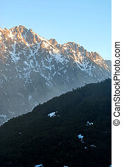 Snowy sunlight mountains and pine 3