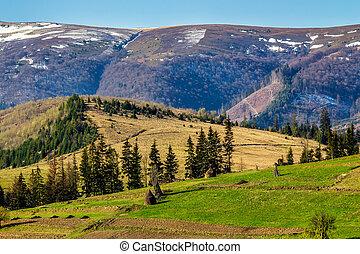 snowy tops of carpathians in spring - carpathian mountain...