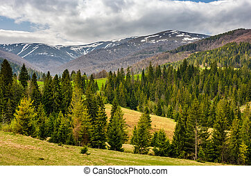 snowy tops of carpathians in springtime - carpathian...
