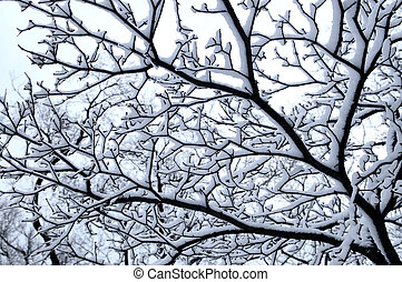 Snowy tree - Branch of a winter tree covered with snow