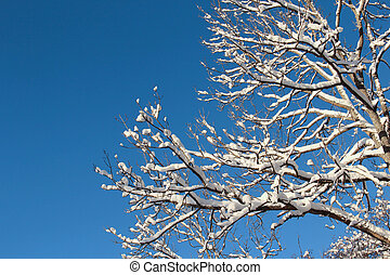 Snowy tree branches against a blue sky