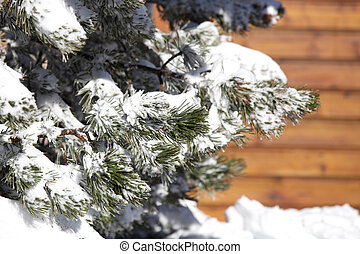 Snowy tree in front of chalet