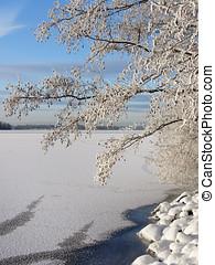 Snowy tree near frozen lake