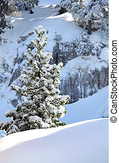 Snowy tree on a mountain