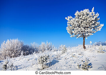 snowy tree on a sunny day