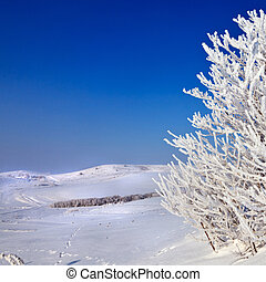snowy tree on a sunny day