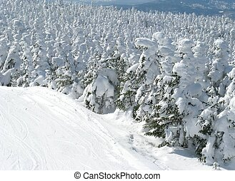 snowy tree tops
