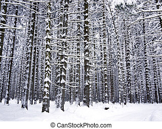 Tree trunks covered with snow in the forest