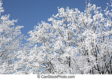 Snowy trees in High Tatras mountains, Slovakia