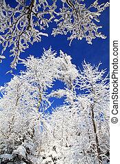 Snowy trees in High Tatras, Slovakia
