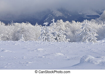 winter mountains - Snowy trees in the winter mountains