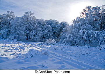 Snowy trees in the winter mountains