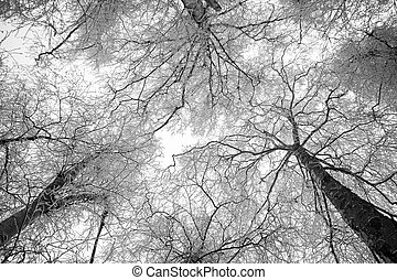 Standing between snowy trees looking to the sky - horizontal black and white image